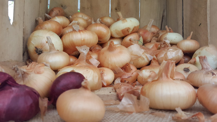 onions are a great foundation