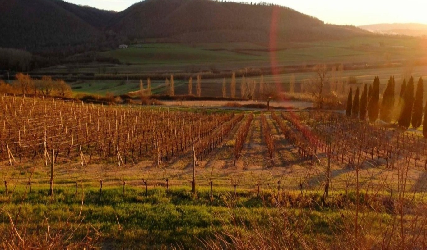 il Tramonto sulle vigne