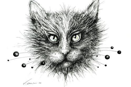art dessin drawing draw cat cats  mysterious mystere poésie chat la belle et la bête valérie Albertosi aquarelle