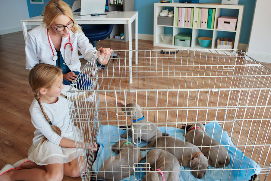 girl-with-puppies-at-a-vet-EEV9X9T.jpg