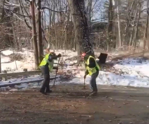 Uspo, tree removal