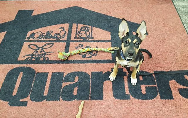 Puppy Learn and Play, Windham