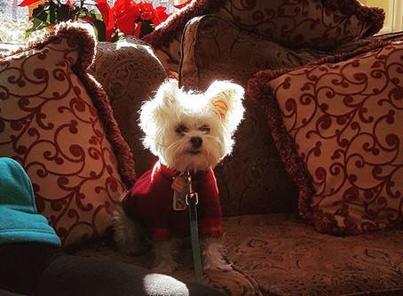 Help Keep Dogs Off the Naughty Dog Bite List This Holiday Season