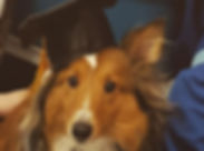 Congrats to Dusty on graduating Gooddogz