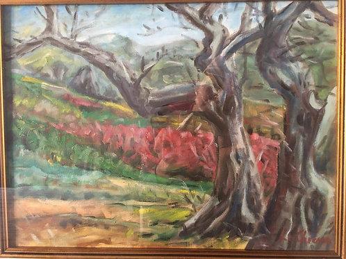 Пейзаж оливковые деревья и цветы копеечника . Анджело Ла Кьюза.Холст. Масло