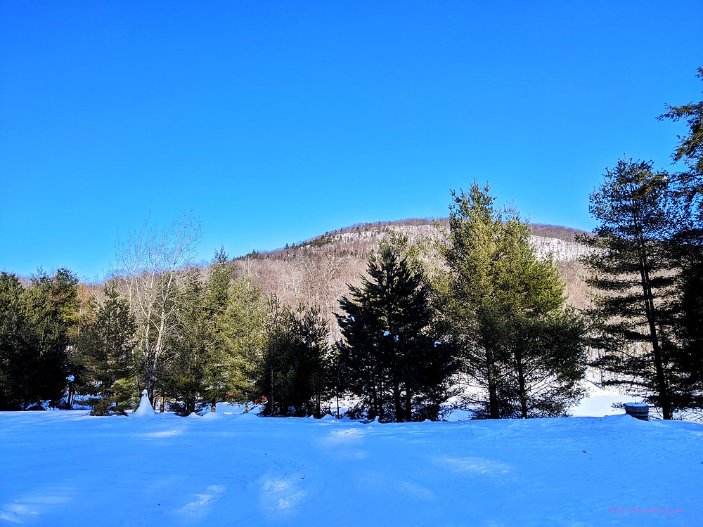 snowy field with pine trees and low mountin in background with clear blue sky above