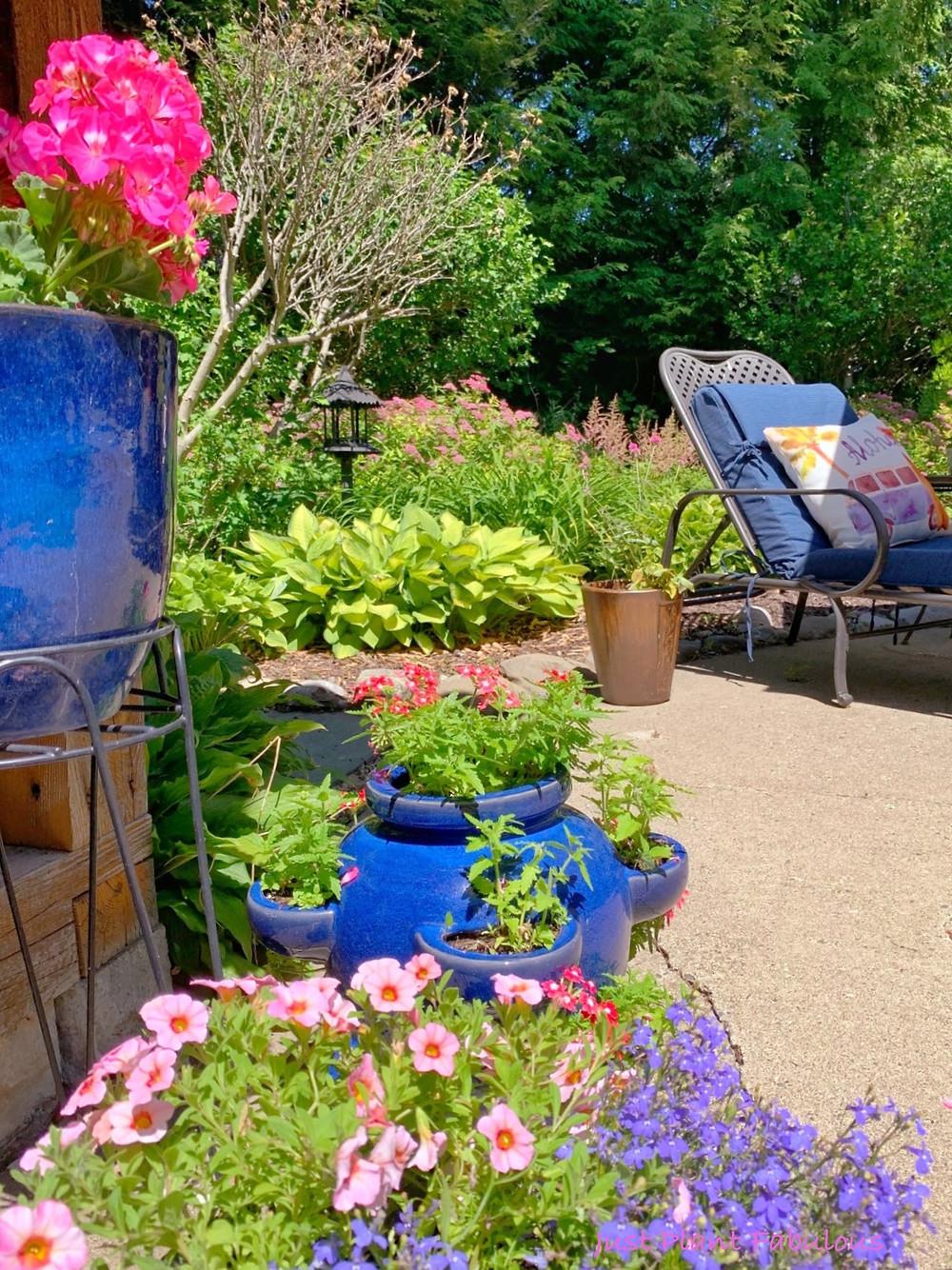 flowering plants in back yard