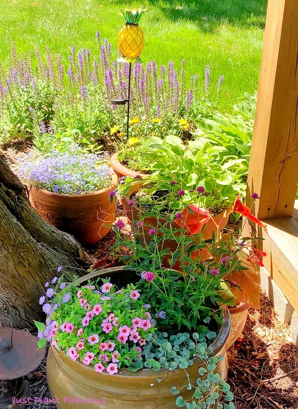 flowering plants in pots in back yard