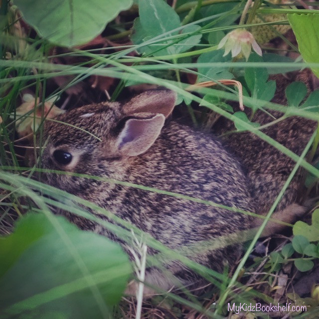 picture of little baby bunny hiding in a garden