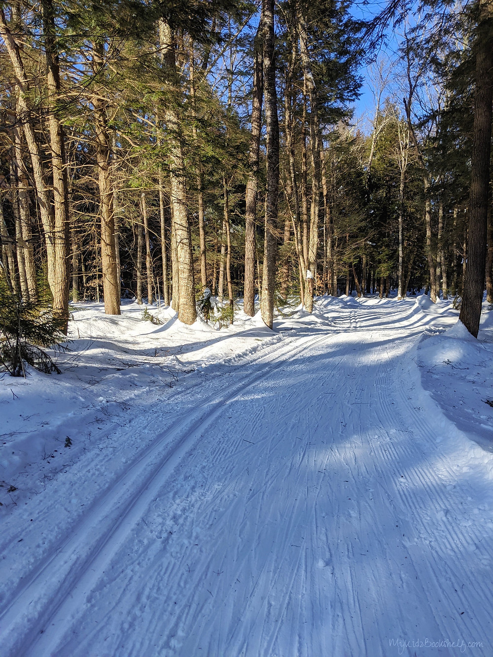 snowy cross country ski trail groomed for skis with pine trees on both sides