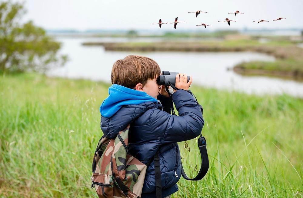boy bird watching using binoculars in meadow by waterway with geese overhead