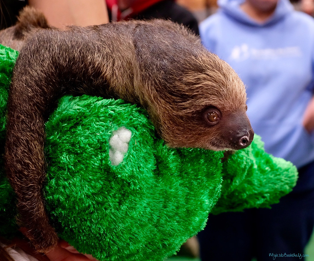 Sloth-holding-on-to-stuffy-at-wildlife-expo