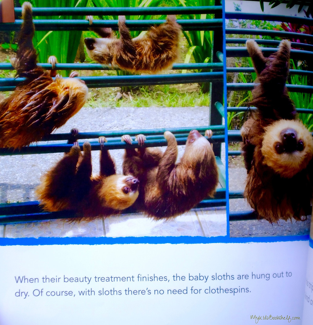 sloths-being-hung-out-to-dry-picture-book-nonfiction-photograph
