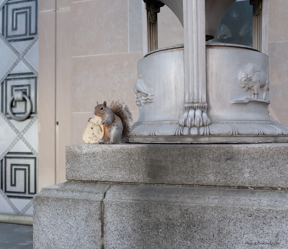 A-squirrel-just-enjoying-his-bagel-in-Washington-D.C.!-not my college town, pic from a trip a couple of years ago!