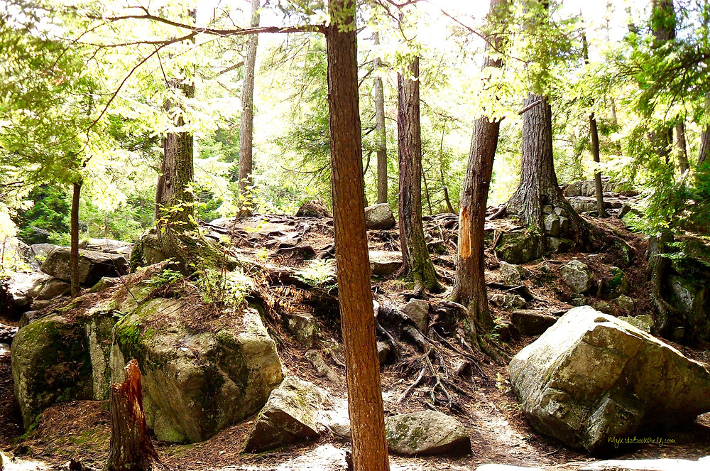 trees-and-rocks-in-the-forest-with-sunshine-coming-through