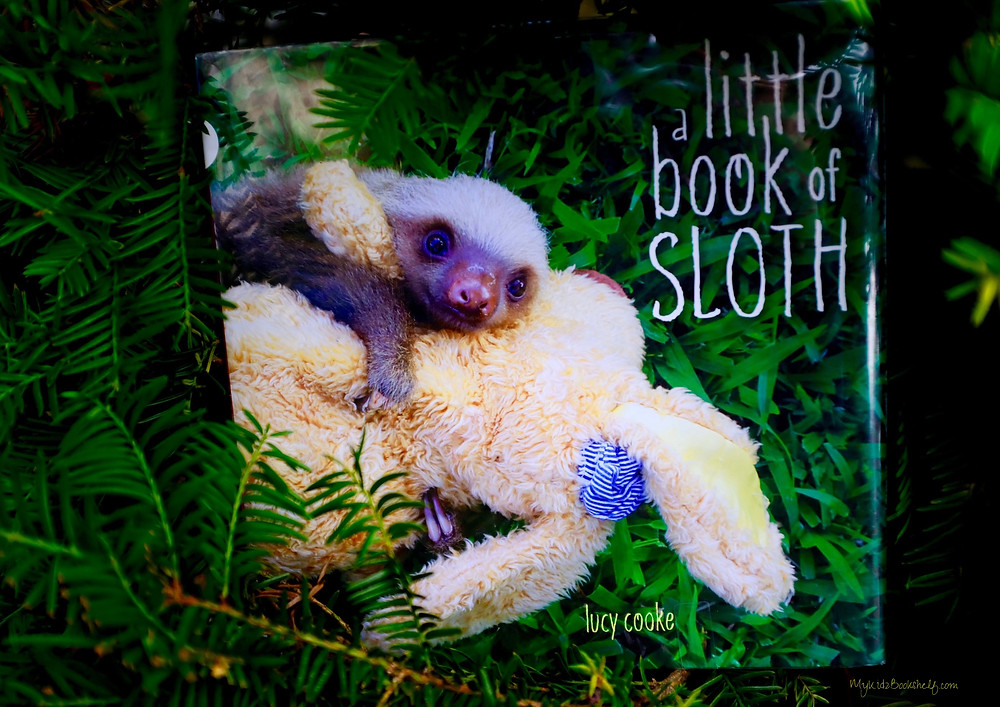 baby-sloth-on-stuffy-illustration-book
