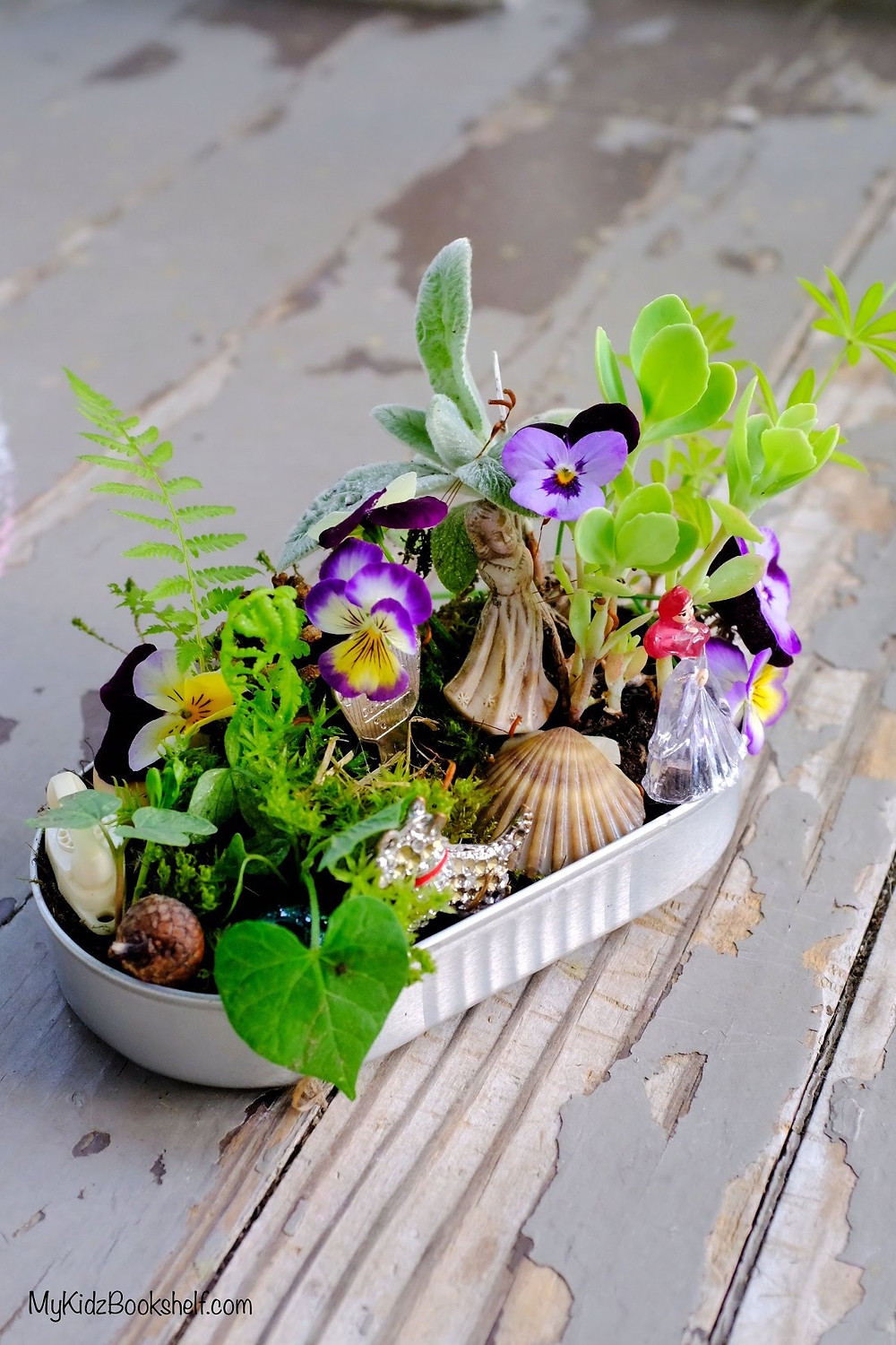 Mini DIY fairy garden in a tin with morning glory, lamb's ear, succulent, shell, acorn cap and moss