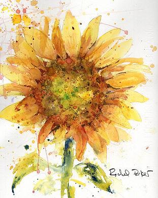 sunflowersplash139.jpg