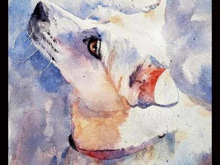 Transparent White Dog - 4 Sessions