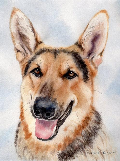 """Light German Shepherd Portrait"" Giclée Art Print"