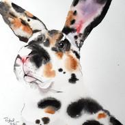 Calico Bunny