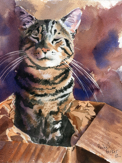 """""""Boxed Up"""" Tabby Cat Giclée"""