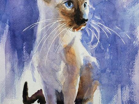 New 1 hour Siamese Cat Tutorial