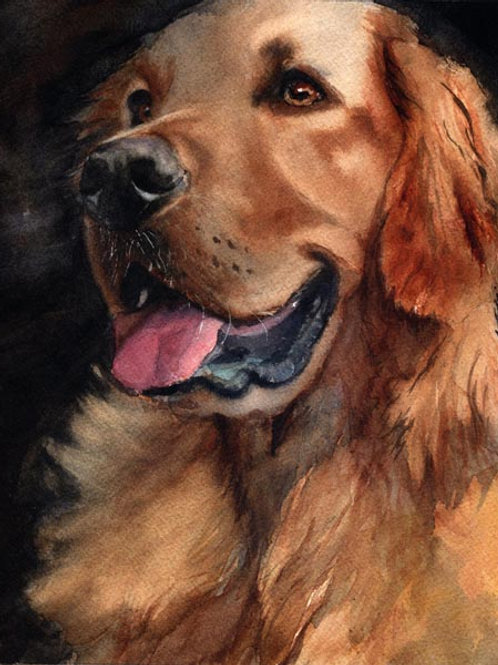 """Golden Retriever"" Giclée"
