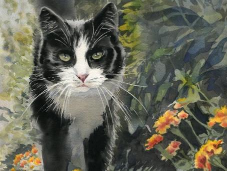 New Tuxedo Cat art