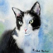 Tuxedo Cat