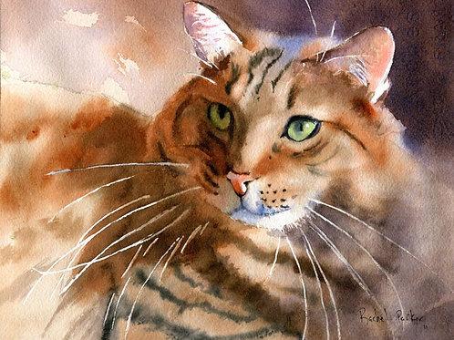 """Gina's Maine Coon"" Tabby Cat Giclée"