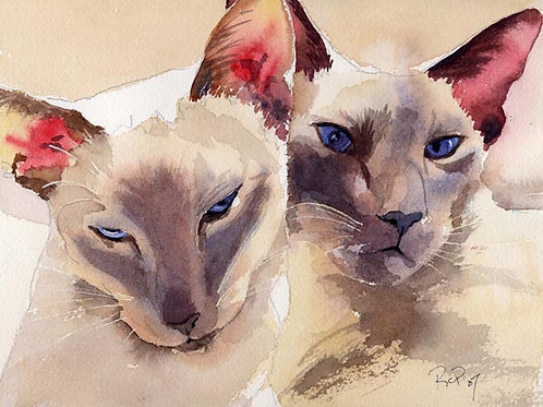 """Cog's Kitties"" Lilac Point Siamese Cat Giclée"