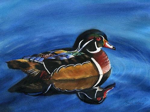 """""""Wandering Wood Duck"""" Giclée"""