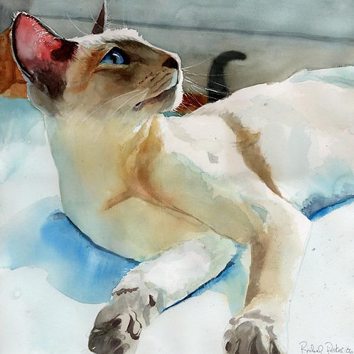 """""""In Peacock Shadows"""" Lilac Point Siamese Cat Giclée"""