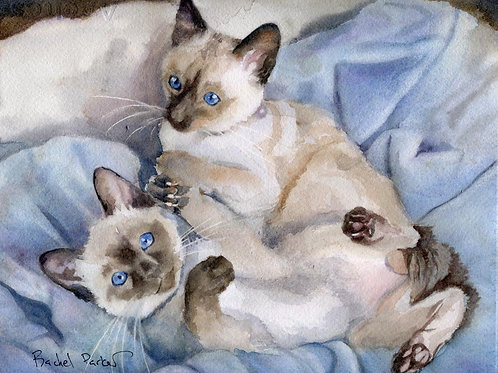 """Ready to Rumble"" Siamese Kitten Cat art print"