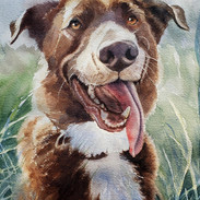 Happy Dog - Kenobe