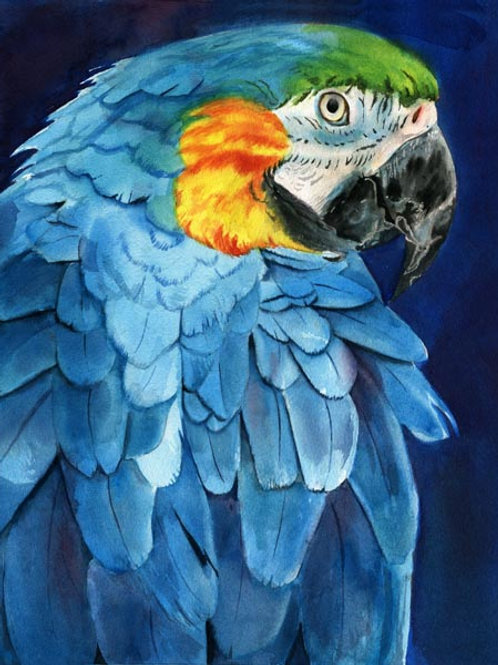 """""""Macaw"""" Giclée"""