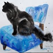 Black Cat Experiments
