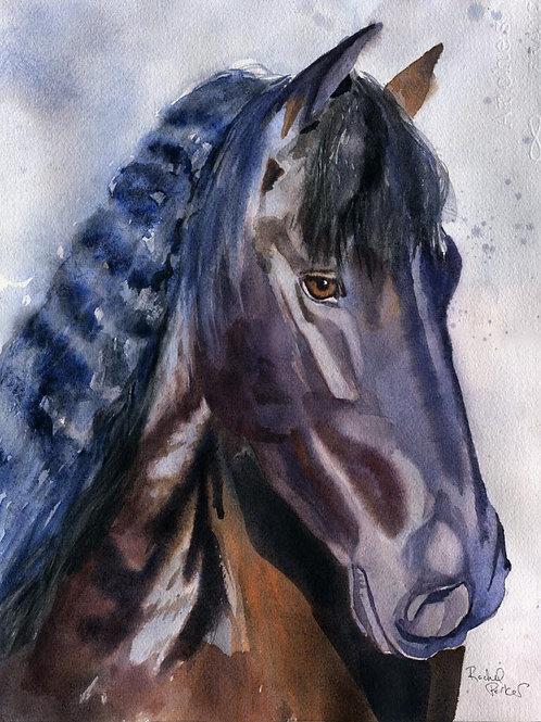 """Mystere"" 11x14"" Watercolor"