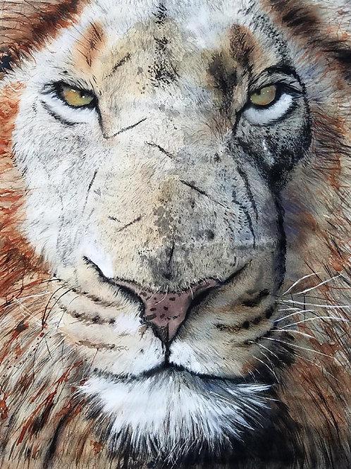 """Lion Eyes"" Wildlife Africa Art Giclée"
