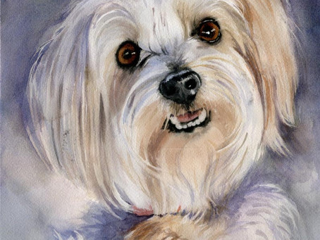 My dog portrait commissions and video lessons of how to paint dogs