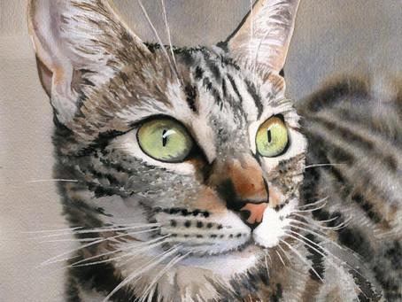 My tabby cat art is headed to Austria!