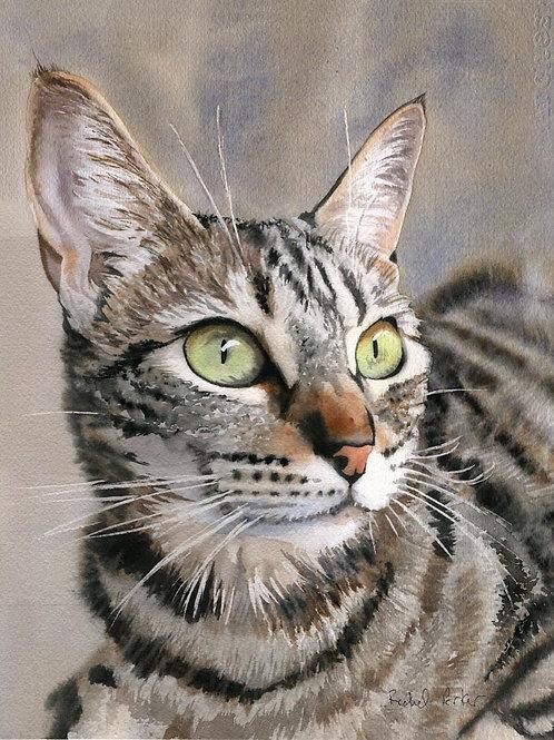 """""""Tabby Eyes"""" Tabby Cat Giclée"""