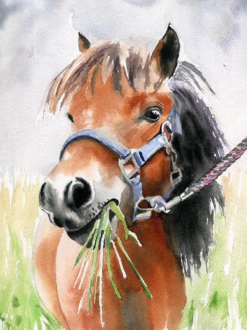 """Shetland Pony Munchies"" Giclée"