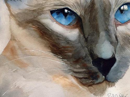 """Cerulean Eyes"" Lilac Point Siamese Cat Giclée"