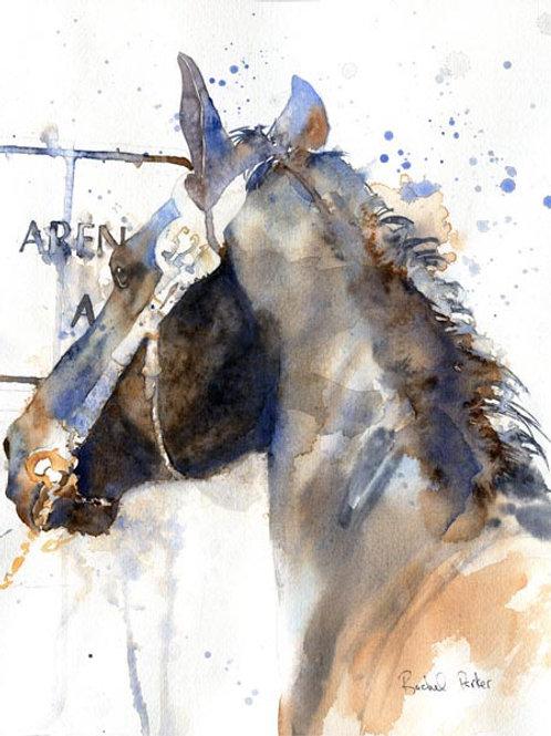 """""""Friesian Keuring"""" 11x14"""" Watercolor"""
