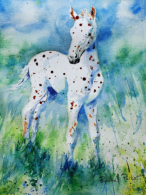 Appaloosa Foal Watercolor Tutorial