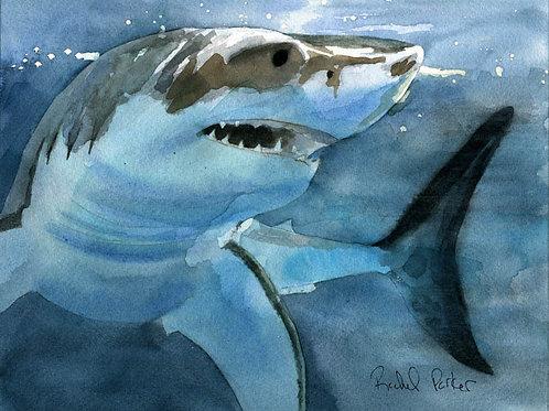"""Sharky"" Giclée"