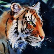 Tiger Emerging