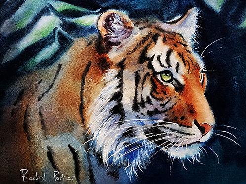Clemson Tiger Art Print